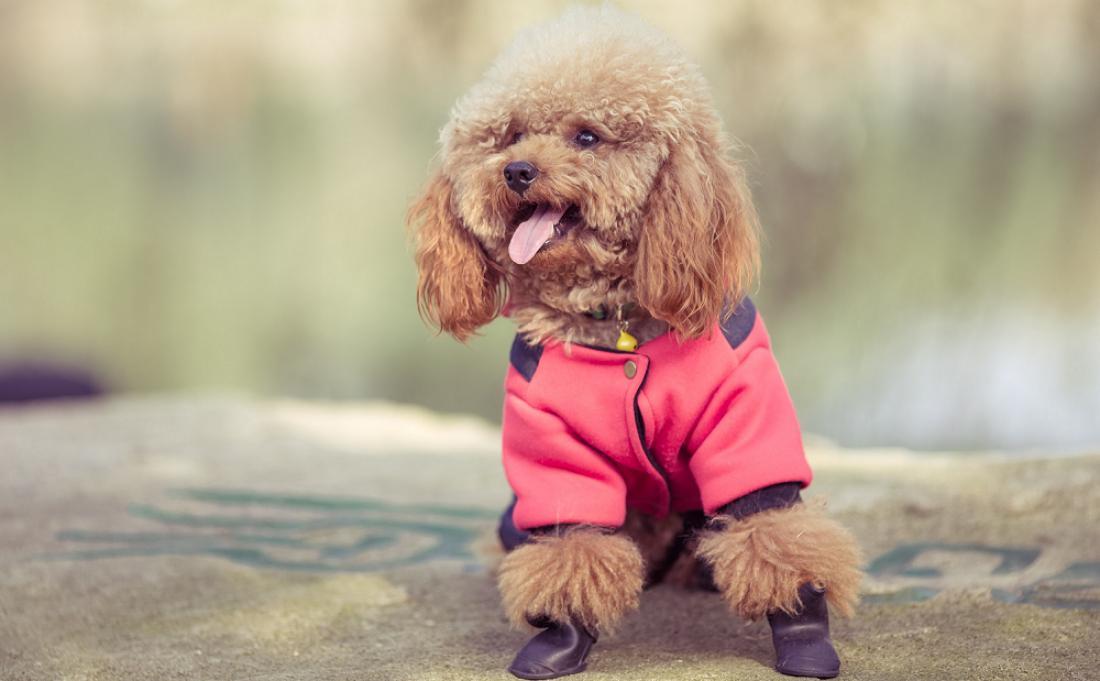 Bäst hundskor 2020: så väljer du rätt hundskor | Husdjursrevyn