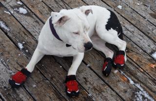 Vinterskor för husdjur Hund Pitbull Vattentäta Stövlar Hund