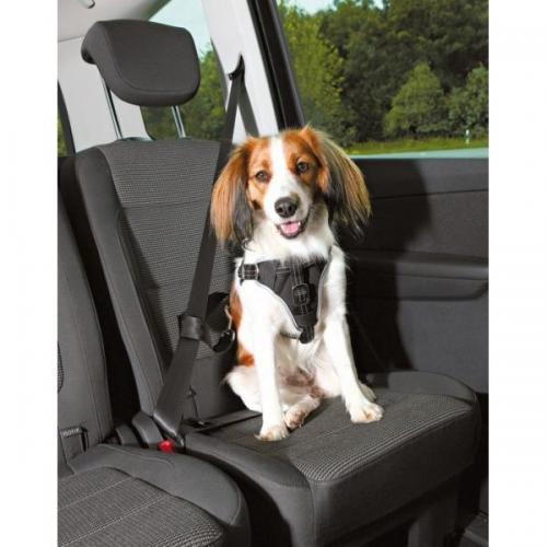 Hund med Trixie Bilbälte i bilen